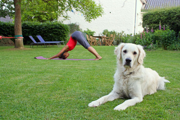 How to Do Yoga with Your Dog